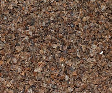 Racine OREILLER NATUREL BIO garnie de balles de SARRASIN et ou SARRASIN/laine